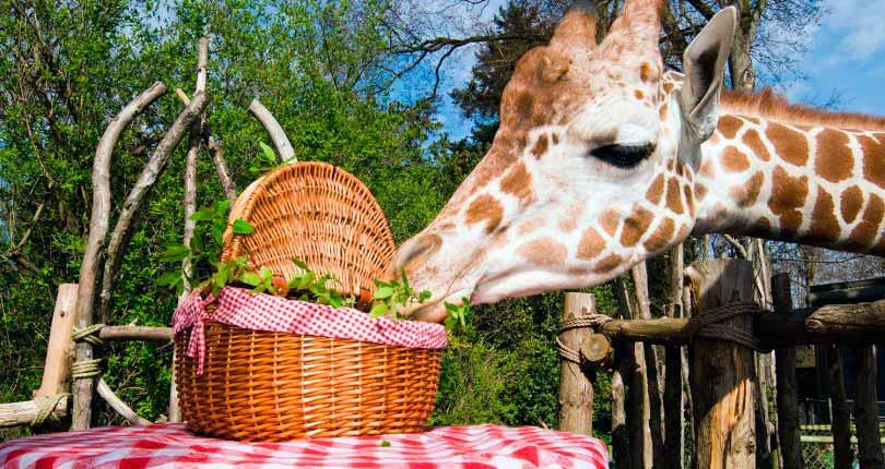 Пять самых интересных зоопарков мира